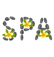 lettering spa made pebbles and frangipani vector image
