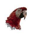 parrot head vector image