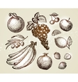 Set food sketch Hand-drawn fruits such as grape vector image vector image
