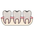 teeth with tooth root view in colored crayon vector image vector image