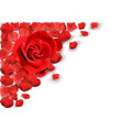 white background with red rose vector image vector image