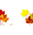 banner with colorful autumn maple leaves vector image