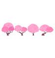 blossom sakura tree vector image