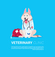 dog holding stethoscope veterinary clinic icon vector image