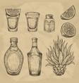 glass and bottle tequila cactus salt and lime vector image
