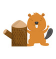 beaver and tree stump on white background vector image vector image