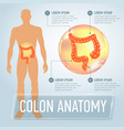 colon infographics banner vector image
