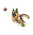 german shepherd dog playing and catching a ball vector image vector image