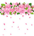 realistic sakura japan cherry or apple tree branch vector image