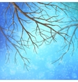 Winter Tree Branches vector image vector image