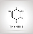 chemical structure thymine one four vector image vector image