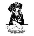 doberman pinscher - peeking dogs - - breed face vector image vector image