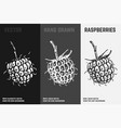 hand drawn blackberry or raspberry icons vector image vector image