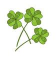 lucky four leaf green clover vector image