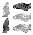 Pigeon wings and dove linear silhouette vector image vector image
