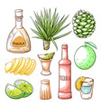 tequila pub mexican drink hand drawn set vector image vector image