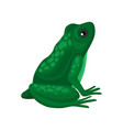 big green frog sitting isolated on white vector image vector image