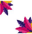 colored feathers decoration vector image vector image