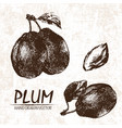 digital detailed plum hand drawn vector image vector image