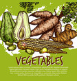 exotic vegetables and edible roots vector image vector image