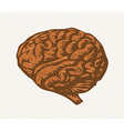 human brain vector image vector image