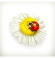 Ladybug and chamomile vector image vector image