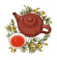 rooibos tea vector image vector image