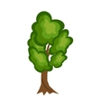 Tree nature green vector image