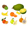 tropical exotic fruits set icons vector image vector image