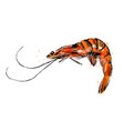 colored hand sketch shrimp vector image vector image