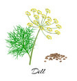 fresh dill isolated on white background vector image vector image