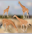 giraffe1 vector image vector image