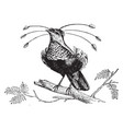 golden bird of paradise vintage vector image vector image