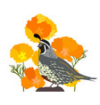 poppies and quail vector image vector image
