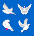 white pigeons in various poses isolated on blue vector image vector image