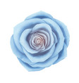 beautiful blue rose floral decorative vector image vector image