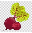 Beet isolated organic food farm food vector image vector image