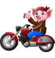 cartoon funny pig riding a motorcycle vector image