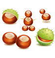 chestnut and pawns toys for kids vector image vector image