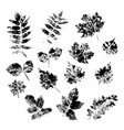 ink stamps different leaves on white vector image