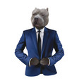 pitbull in man suit on white background vector image