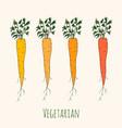 set of fresh orange ripe carrots vector image vector image