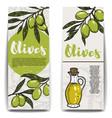 set of olive oil flyers olive branch vector image
