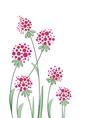 flowers in garden vector image vector image
