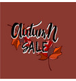 hello autumn sale text poster of leaf fall vector image
