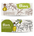 set of olive oil flyers olive branch vector image vector image