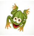 Cute green cartoon frog sitting on a white vector image
