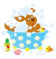 Dog bathing vector image