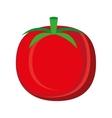 colorful tomato graphic vector image