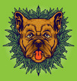 dog weed cannabis background